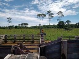 Sítio à venda, por R$ 1.400.000 - Zona Rural - Machadinho D'Oeste/RO