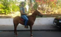 Égua mança