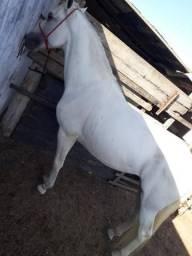 Vende-se cavalo Paulista