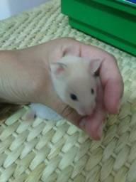 Casa de hamster sírio com gaiola