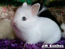 Mini Coelhinhos