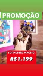 Yorkshire Macho R$1.199