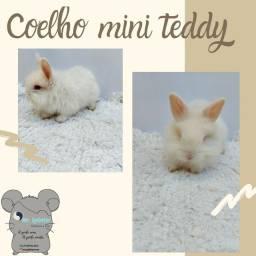Coelho mini