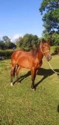 Égua pra venda
