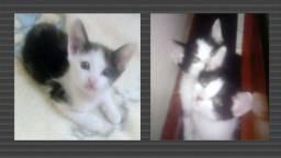Três Gatinhos Lindos para Adoção Responsável