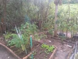 Terra adubada com adubo orgânico + esterco bovino $1,00 o kilo