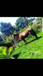 Vendo cavalo de  Patrão, muito top!