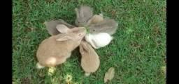 Filhotes de coelho. Coelhinhos