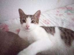 Gato macho 5 meses adoção