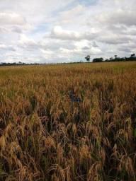 Fazenda à venda, por R$ 3.950.000 - Zona Rural - Nova Mamoré/RO