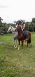 Cavalo. Manga larga