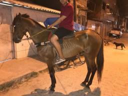 ((Cavalo De Passada Pra Vender Urgente))