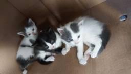 Doação de miau