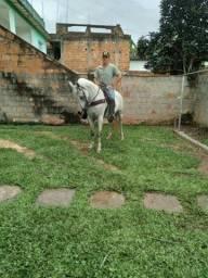 Cavalo  MMM
