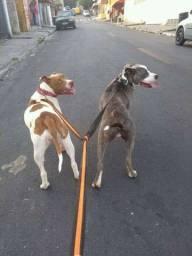 J.V passeador de cachorro./ dog walker