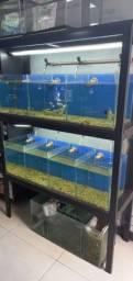Vendo bateria de aquários