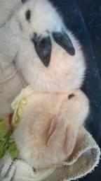 Coelhos coelhinhos