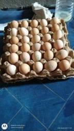 Ovos galados caipirão + outras raças grandes