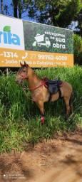 Vendo cavalo de patrão