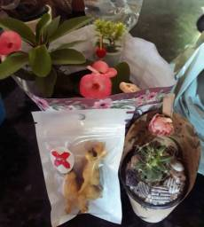 Vende se plantas
