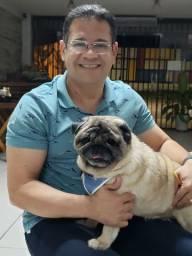 Pug reprodutor com Pedrigree