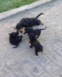 Filhote de cachorros .