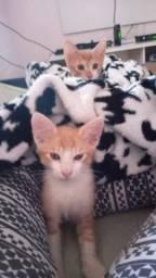 Lindos Filhotes de Gato