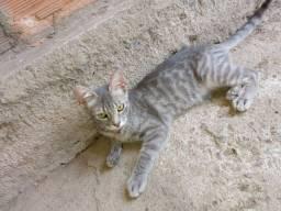 Doaçao    / 2 gatas 4 meses