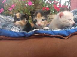 Doa-gatos filhotes