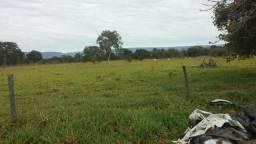Fazenda 600 hectares 061 98665 2087