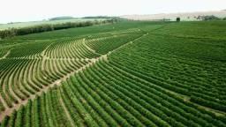 Fazenda - 62 Alqueires - Piraju,Sp