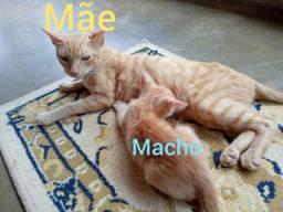 Doce filhotinhos de gato