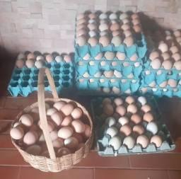 Ovos galinha caipira 8 reias dúzia 240 caixa 360 ovos atacado