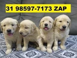 Canil Cães Filhotes Premium BH Golden Akita Rottweiler Labrador Dálmatas Pastor