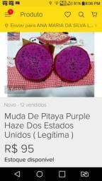 Mudas de pitaya 5 tipos diferentes
