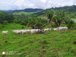 Sítio à venda, por R$ 2.520.000 - Zona Rural - Jaru/RO