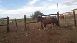 Égua a VENDA