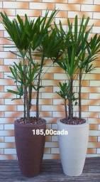 VASOS e PLANTAS NATURAIS ornamentais COMPLETOS