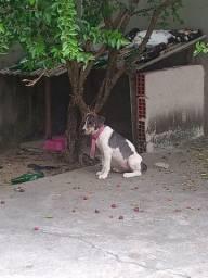 Amora - Beagle