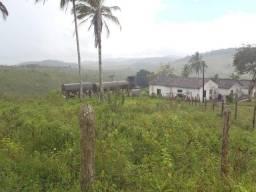 Vendo fazenda com 830 hectares na região de Ibirapitanga/BA