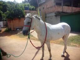 Cavalo macha batida de centro 8 anos