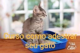 Curso como adestrar seu gato