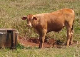 Vendo tourinho sanepol