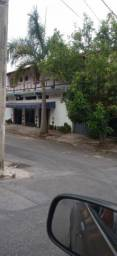 Palmeira Imperial com 8 metros
