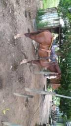 Cavalo e um burro