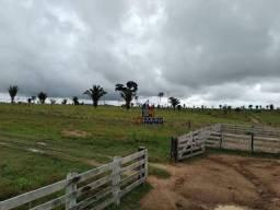 Fazenda à venda, por R$ 10.885.000 - Zona Rural - Nova Mamoré/RO