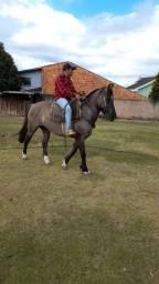 Cavalo crioulo lindo