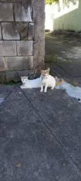 Doa-se esse casal de gatos lindos.!!