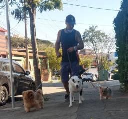 Dog walker ( passeador de caes ) hospedagem exclusiva petsitter taxi