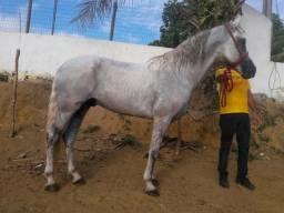 Cavalo Tordilho 71 993926488